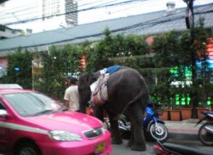 Wenn Du im Morgengrauen einen Elefanten siehst, ist es Zeit ins Bett zu gehen